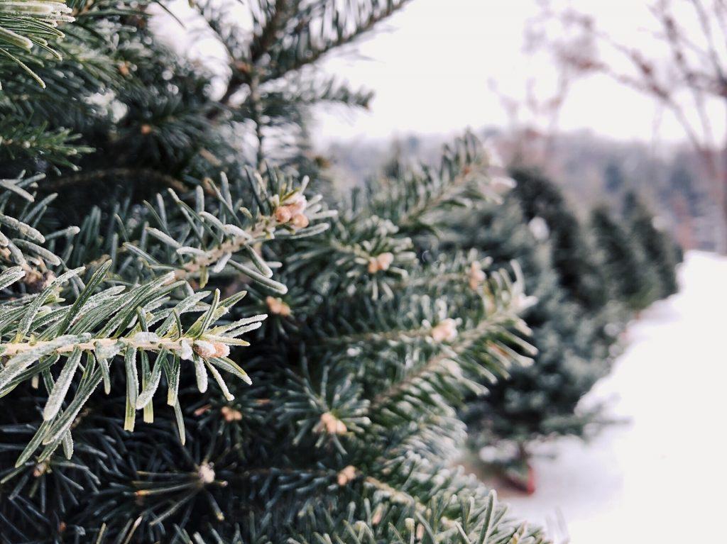 adopteer een kerstboom.
